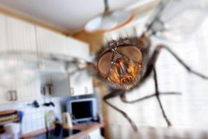 insecte volant dans la cuisine, évitez cela grâce à la désinsectisation