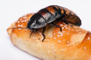 insecte parasite sur du pain, appelez nous pour un entretien